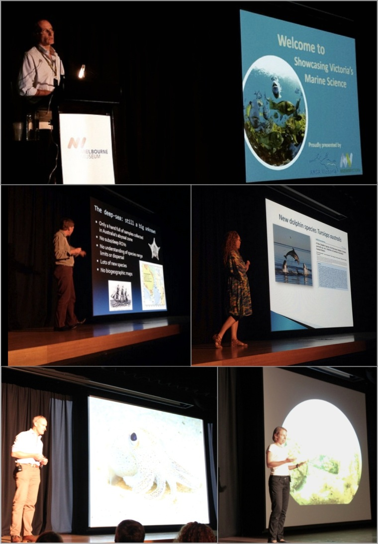 Our evening of marine science presentations: Dr Mark Norman (introducing our speakers), Dr Tim O'Hara, Dr Kate Charlton-Robb, and Associate Professor Jan Strugnell. Image credits: Vera Gin (Museum Victoria) and Allyson O'Brien (AMSA Victoria)